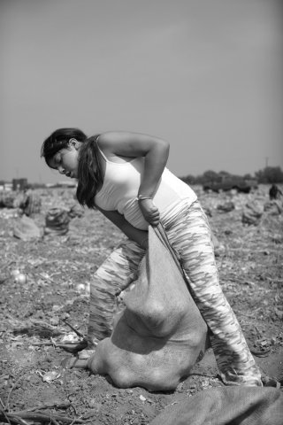 Zulema is forced to withdraw from school and harvest crops.