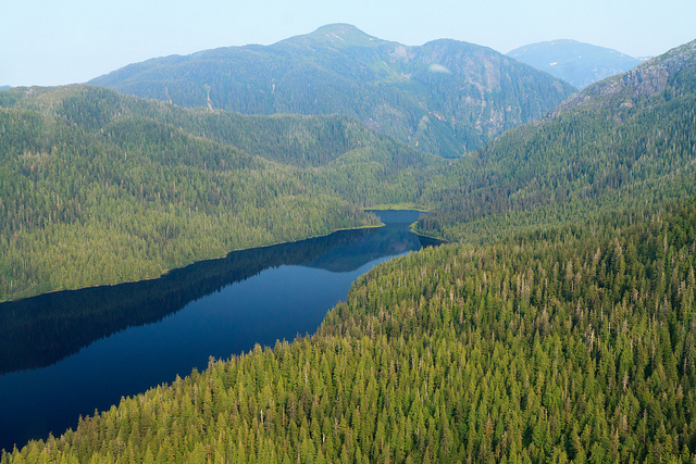 Aerial view of Tongass National Forest. The effects of logging in this forest will impact an ecosystem of animals as well as humans. PHOTO: Alan Wu/Flickr