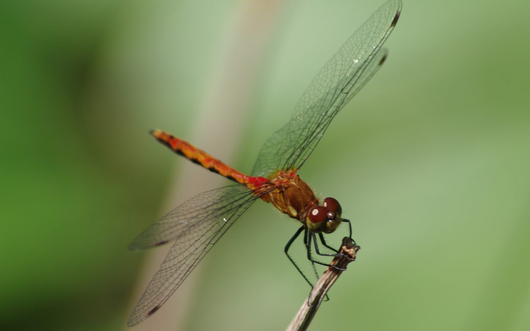 """Dramatic Drop in Insects Threatens a """"Catastrophic Collapse of Nature's Ecosystems"""""""